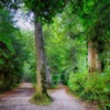 Forest Trail Fork In The Road Path  - fietzfotos / Pixabay