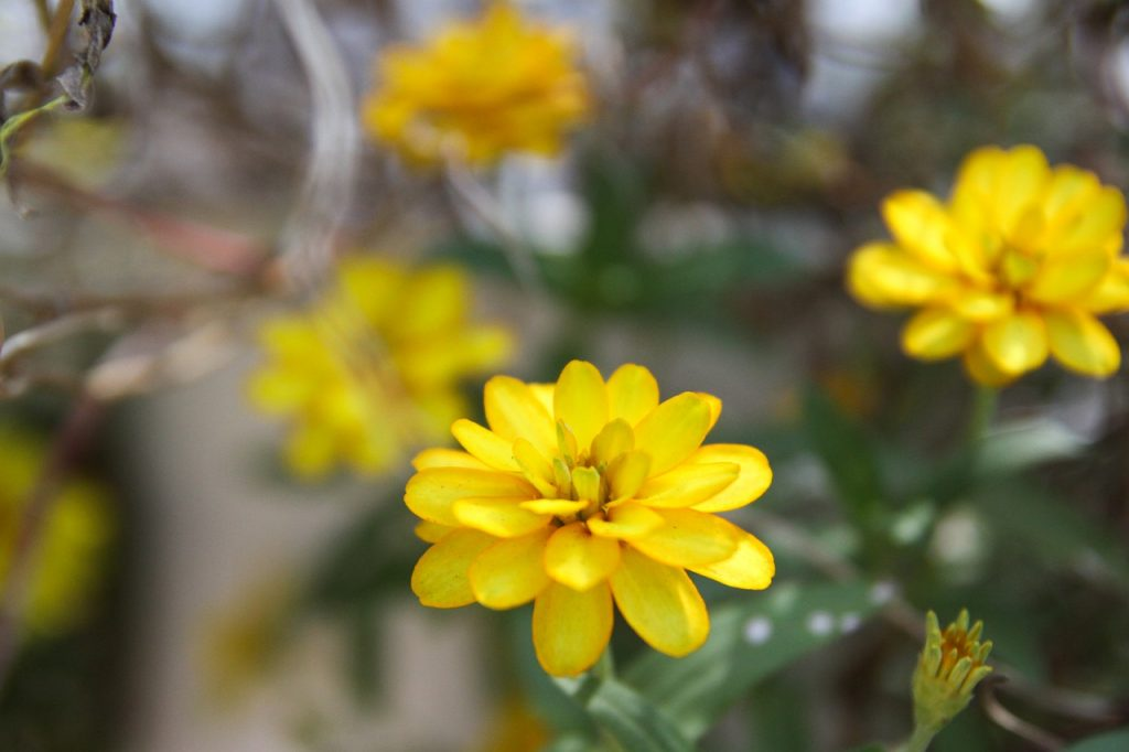 Garden Green Summer Flower Vietnam  - tayphuong388 / Pixabay