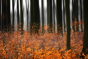 Gravity Forest Leaves Autumn Trees  - 13589689 / Pixabay