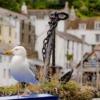 Gull Anchor Bird Feathers Plumage  - Sekau67 / Pixabay
