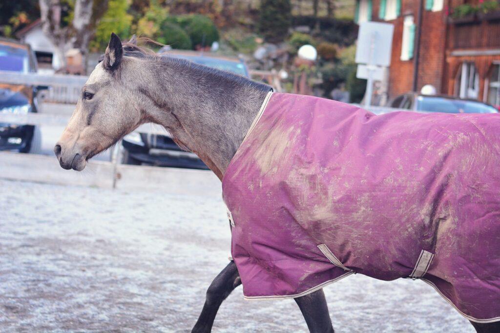 Horse Pony Blanket Horse Blanket  - Pezibear / Pixabay