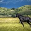 Horse Stallion Equine Equestrian  - Atlantios / Pixabay