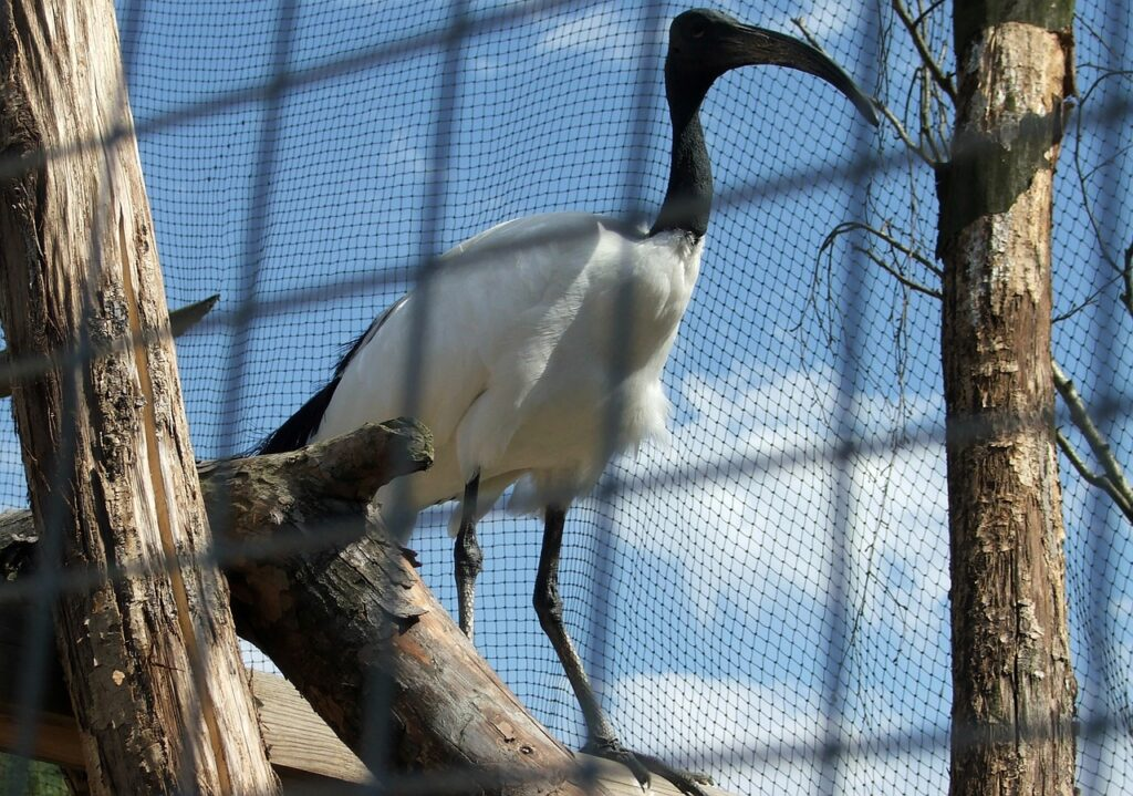 Ibis Nature P Bird Beak Pen  - wawaleszek / Pixabay