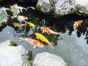 Japan Fukuoka Jin Li Fish Pond  - nananwu / Pixabay