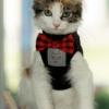Kitten Cat Pet Young Cat Animal  - JonPauling / Pixabay