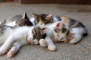Kitten Cats Young Cute Asleep  - WFranz / Pixabay