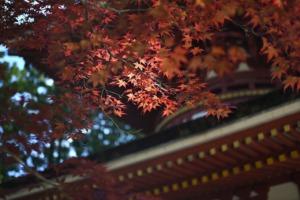Koyasan Japan Temple  - yamabon / Pixabay