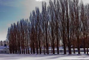 Kz Dachau Memorial  - JordanHoliday / Pixabay