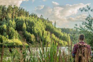 Lake Trees Forest Tourism Stroll  - Vityakter / Pixabay