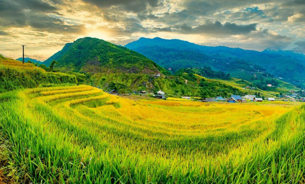 Landscape Terraces Rice Field Crop  - TranDuyet / Pixabay