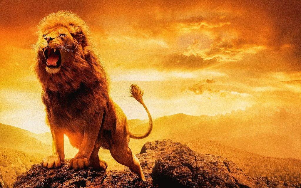 Lion Male Lion Female Lion  - Denexbro / Pixabay