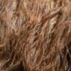 Llama Fleece Llama Fleece  - Pezibear / Pixabay