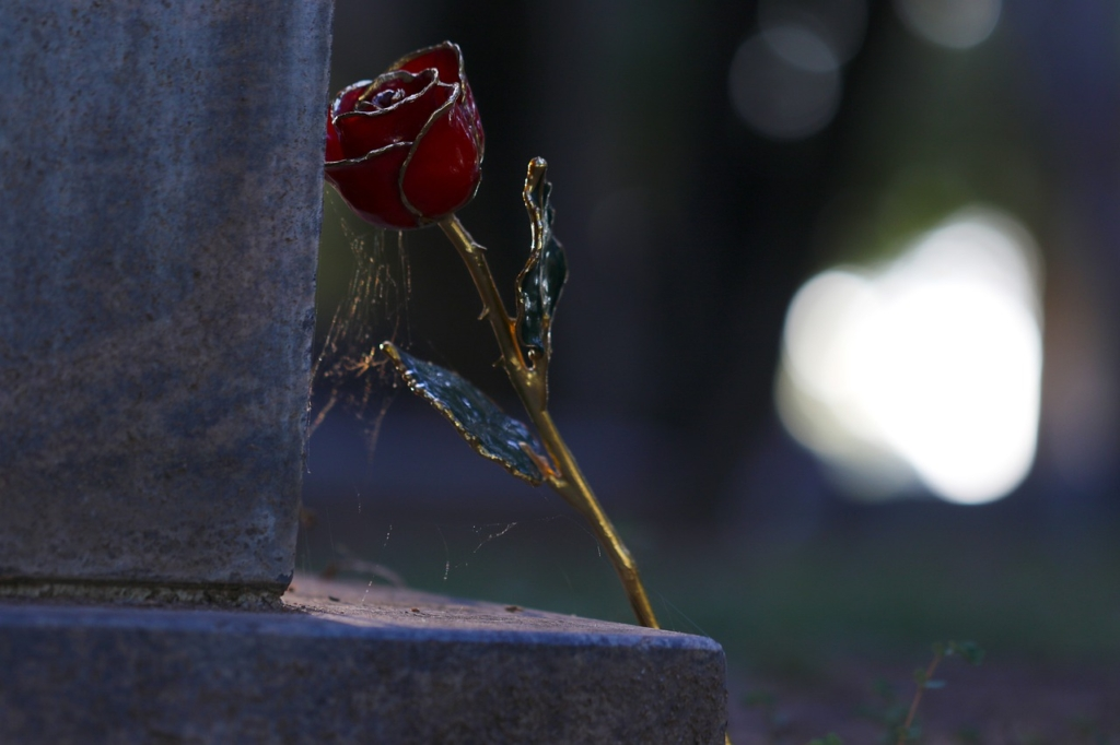 Love Gold Rose Cemetery Grave Dead  - DtheDelinquent / Pixabay