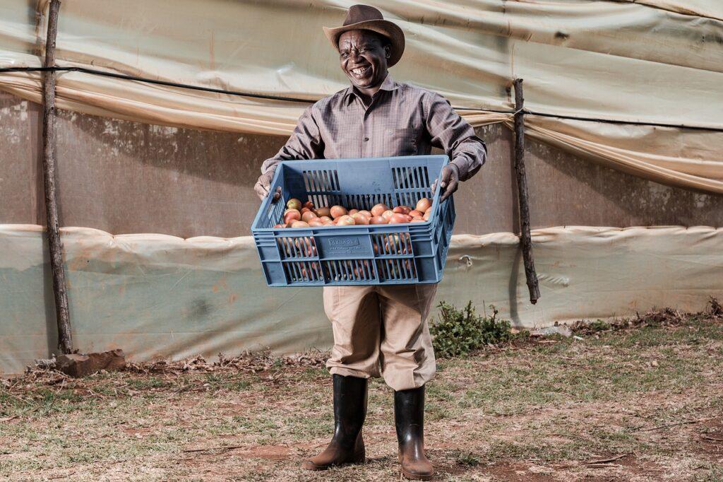 Man Fruit Crate Worker Job Person  - antonytrivet / Pixabay
