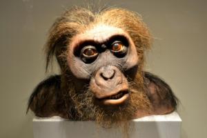Man Neanderthal Cave Man  - ArtisticOperations / Pixabay
