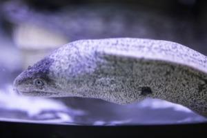 Moray Snake The Fish Fish Sea  - Engin_Akyurt / Pixabay