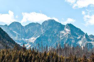 Mountains Trees Forests Conifers  - andjvska / Pixabay