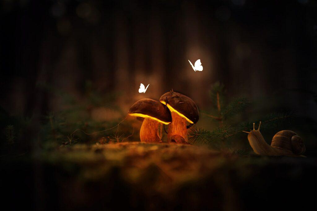 Mushrooms Butterflies Fantasy  - jonhab8533 / Pixabay