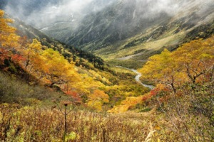 Natural Autumn Yellow Leaves  - Kanenori / Pixabay