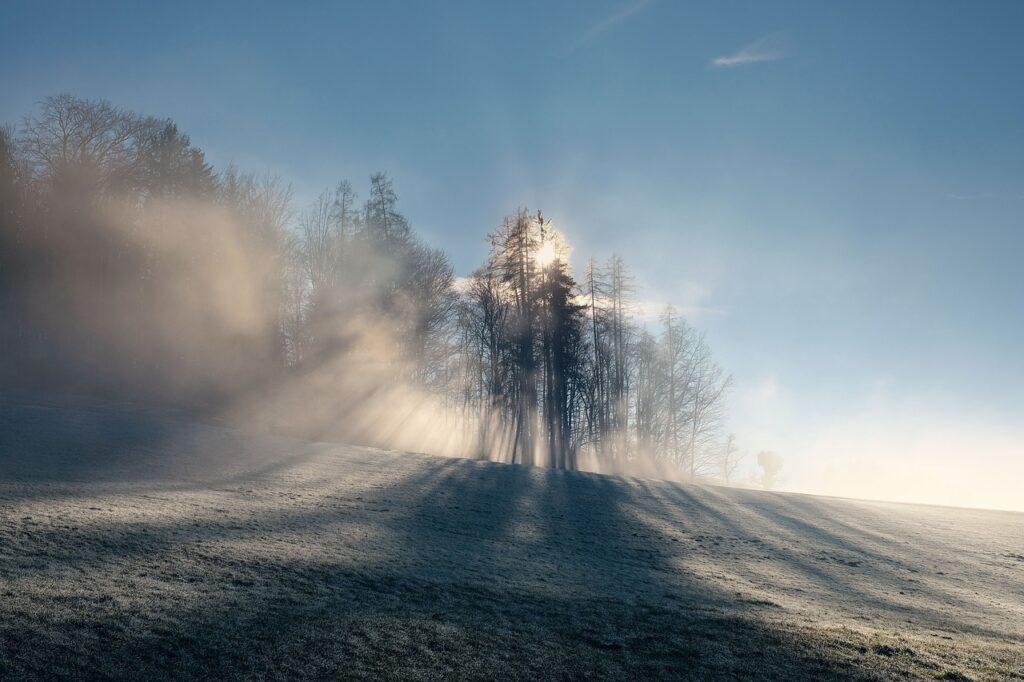Nature Landscape Fog Foggy Forest  - shogun / Pixabay