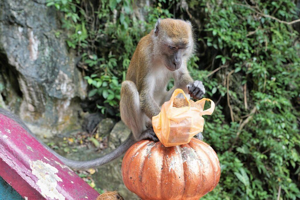 Nature Wood Monkey Jungle Primate  - photosforyou / Pixabay