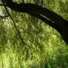 Pasture Tribe Branch Contrast Tree  - Hans / Pixabay