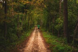 Path Trees Leaves Man Trail Fall  - JoshuaWoroniecki / Pixabay