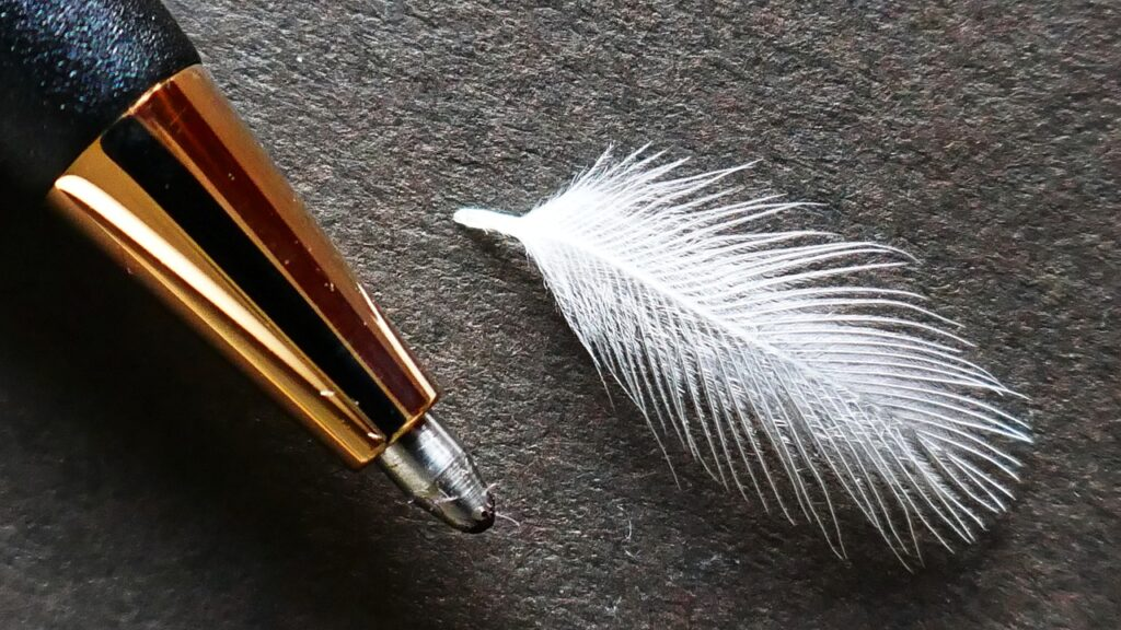 Pen Feather Lightweight Accesory  - Straughan / Pixabay