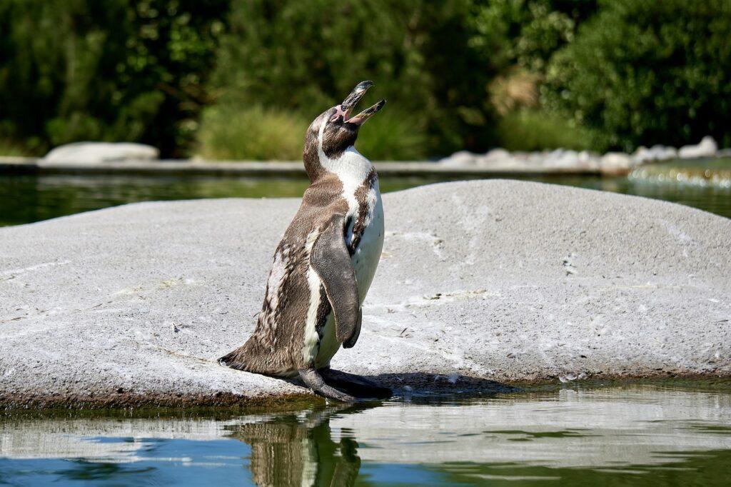Penguin Animal Bird Cute  - errohr / Pixabay