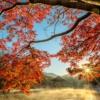 Pond Shia Autumn Tree Leaf Fog  - Kanenori / Pixabay