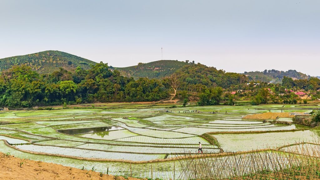 Rice Paddies Mountains Farm  - TranDuyet / Pixabay