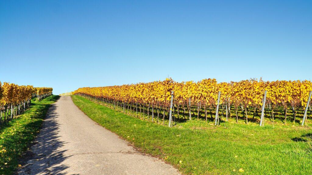 Road Vineyard Rural Path  - matthiasboeckel / Pixabay
