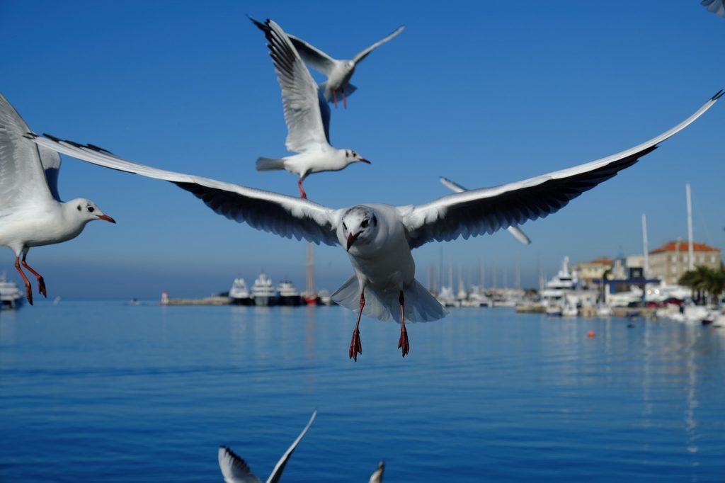 Seagull Bird Beak Wings Boats  - Korbstuhl-am-Meer / Pixabay