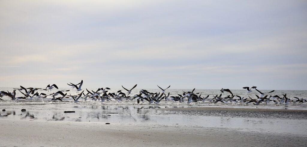 Seagulls Birds Flock Beach Flying  - YeeLey / Pixabay