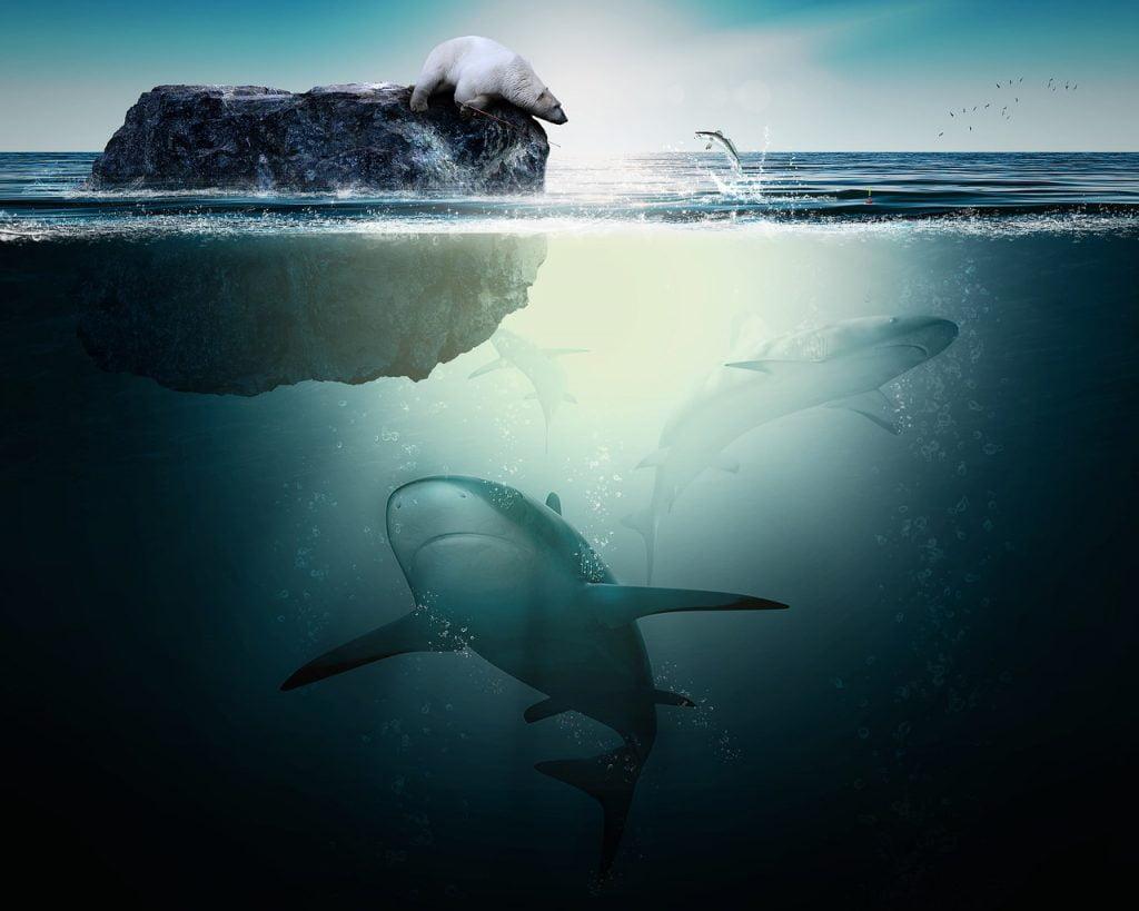 Shark Polar Bear Ocean Nature Fish  - AD_Images / Pixabay