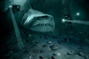 Shark Sea Divers Submarine Ocean  - JanetRDominguez / Pixabay