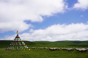 Sheep Grassland Herd Animal  - MountJin / Pixabay