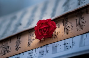 Sheet Music Red Rose Classical Music  - Ri_Ya / Pixabay