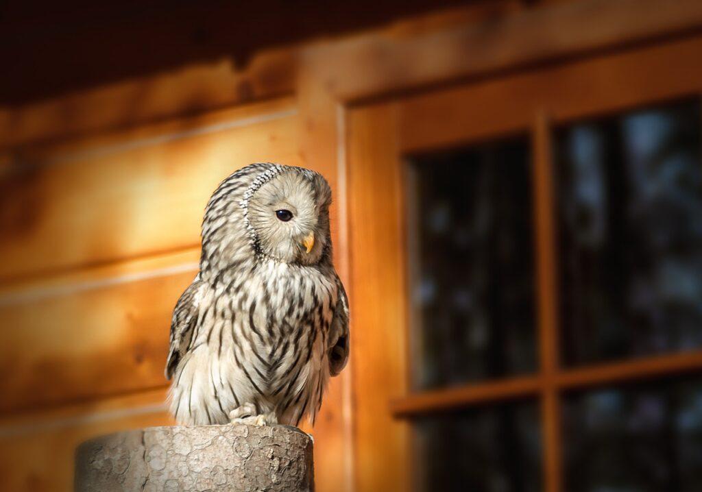 Sowa Bird Sweet Animals  - maciejkow / Pixabay