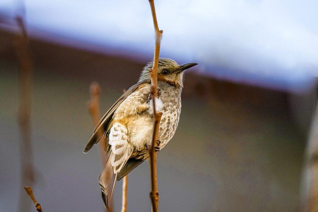 Sparrow Bird Beak Feathers Plumage  - KIMDAEJEUNG / Pixabay