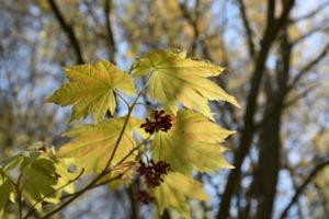 Spring Tree Clone Green Landscape  - GoohaS / Pixabay