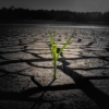 Sprout Drought Cracked Ground  - khw80 / Pixabay
