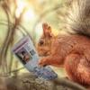 Squirrel Rodent Newspaper Reading  - Sammy-Williams / Pixabay