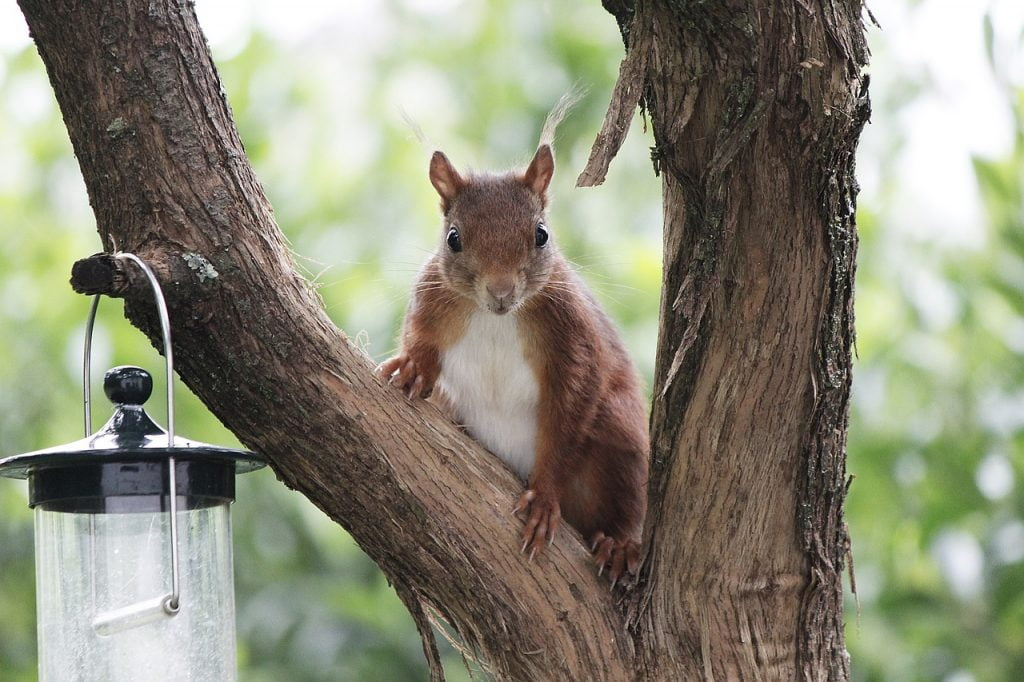Squirrel View Animal Nature Rodent  - Dieter444 / Pixabay