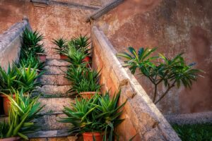 Stairs Plants Old Building Wall  - fietzfotos / Pixabay