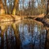 Stream Water Nature Rock Landscape  - music4life / Pixabay