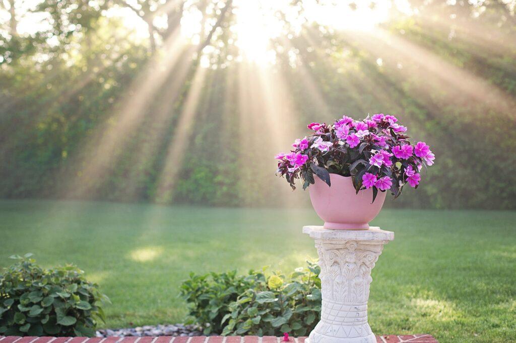 Sunlight Morning Flowers Garden  - JillWellington / Pixabay