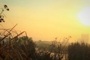 Sunrise Grasses Fog Sun Sunlight  - Mepa_ExyZ / Pixabay
