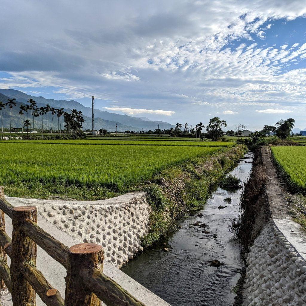 Taiwan In Rice Field Ikegami Taiwan  - brad526 / Pixabay