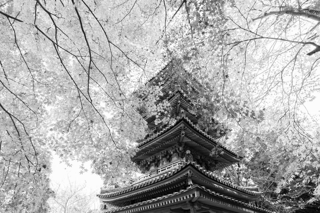 Temple Five Story Pagoda Pagoda  - Kanenori / Pixabay